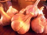 Продаж часнику та насіння часнику